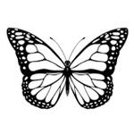 butterfly-150x150
